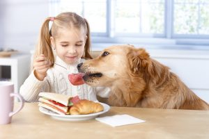 [cml_media_alt id='3937']bigstock-Little-girl-feeding-dog-from-h-45729253-Nyul[/cml_media_alt]