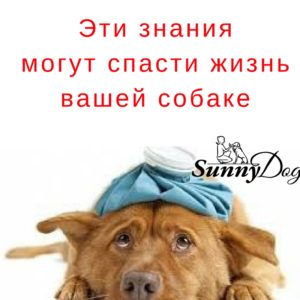 http://sunny.dog/wp-content/uploads/2017/09/stay-in-bed-300x300.jpg
